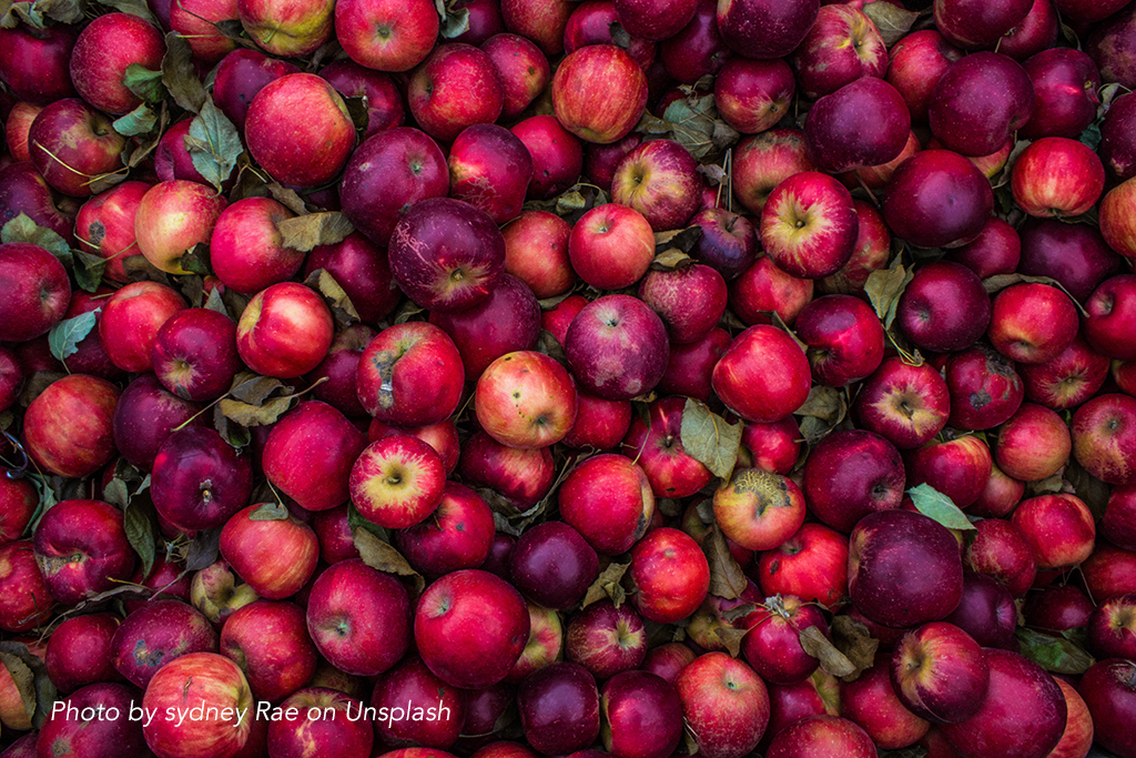 Apple harvest. Food waste in the agriculture sector